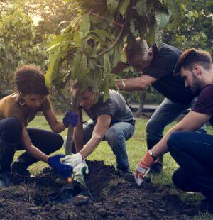 Establishing Trees and Shrubs - Level 4
